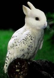 Bunny Owl