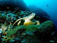 Green-sea-turtle 564 600x450