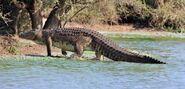 Nile-crocodile-e1464025055687