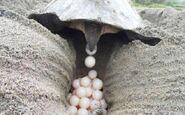 Huevos 17-8-1629822