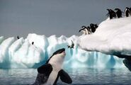 Orca and penguins