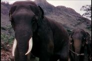 Jul ElephantWalk zps3a9b82df