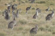 EGKs grouped at Gud zoom crpd P1020144