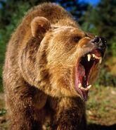 6b9e758cf3216400ea0bab819518083c--california-bear-bear-tattoos