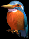 File:C3kingfisher.png