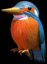 C3kingfisher