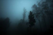 Creepy forest with mist