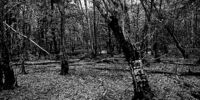The Dering Woods