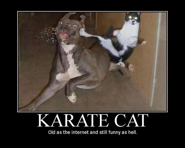 File:Karate cat.jpg