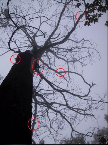 File:Lightningtree.png