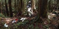Japan's Suicide Forest