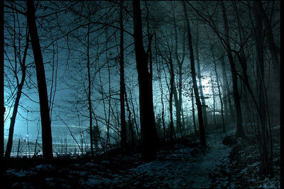 File:Silhouette-night-shadow-forest.jpg