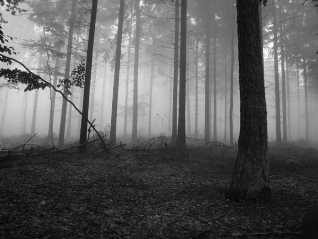 File:Slender forest.png
