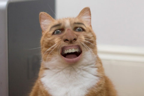 File:Nick cage cat.jpg