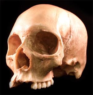 Datei:Skull.png