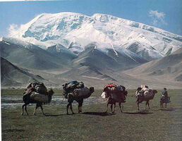 Silk-road-camel-travel