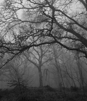 Slender forest 2