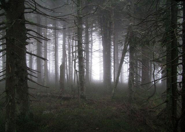 File:Spooky forest by ktostam.jpg