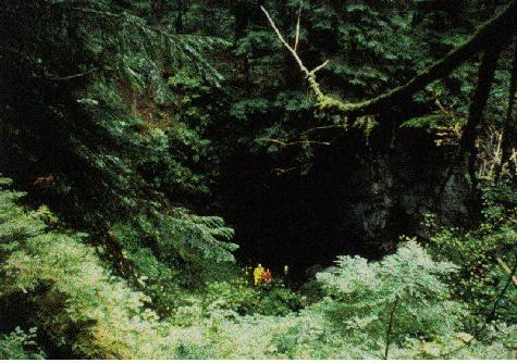 File:Forest Cave.jpg