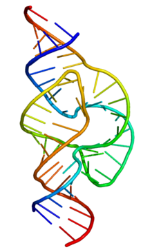 File:220px-Full length hammerhead ribozyme.png