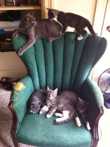File:Kittenschair.png