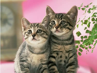 File:Cats 1.jpg