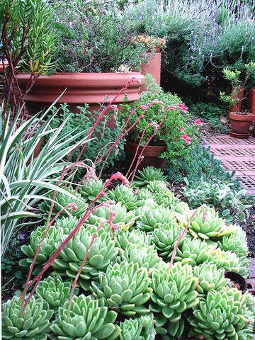 File:Morning in the garden . . ..jpg