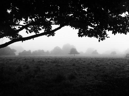 File:Morning Fog Emerging From Trees.jpg