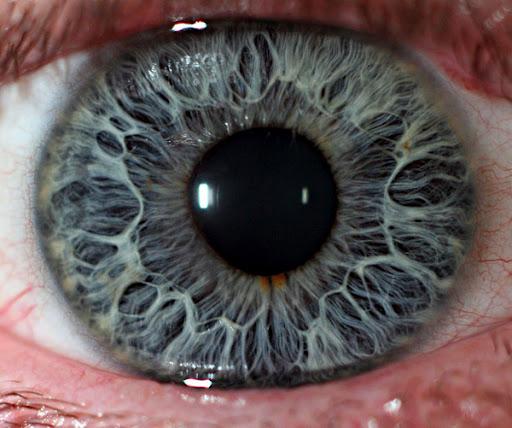 File:Eye-macros-human-eye2.jpg