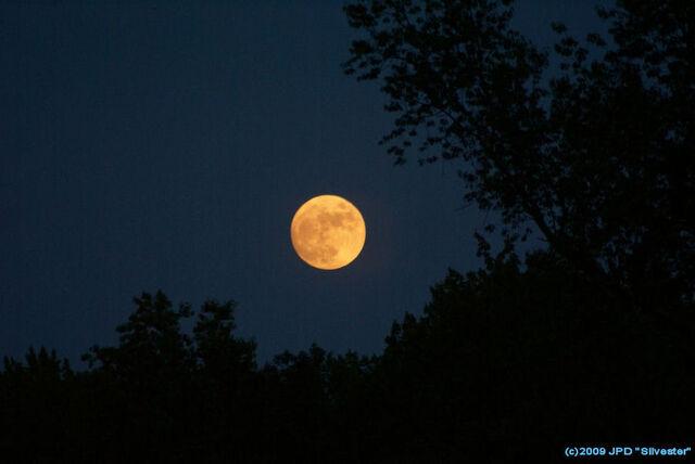 File:Orange-harvest-moon 57176.jpg