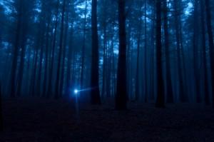 File:Flashlight-In-Woods-300x199.jpg