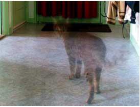 File:Ghost-cat.jpg
