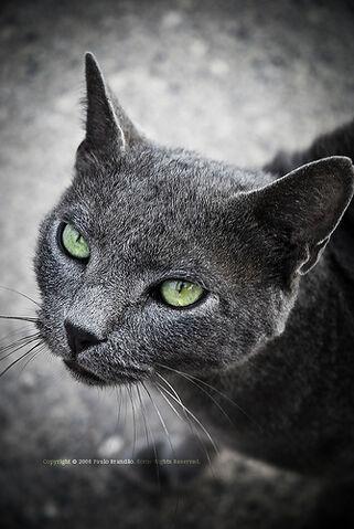File:Green eyes cat.jpg