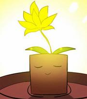 Yamurnia in its pot