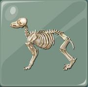 C84DogSkeleton