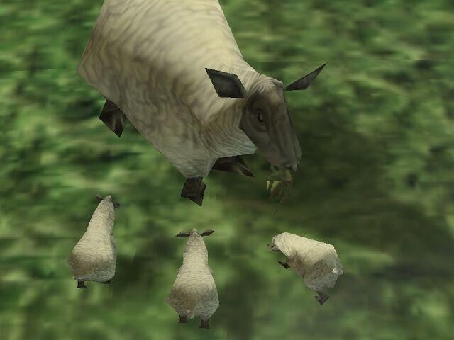 File:Female sheep.jpg