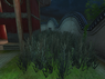 Garden Grass1