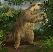 Sherman sloth2