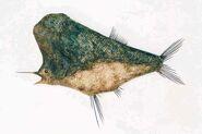 Bagswordfish
