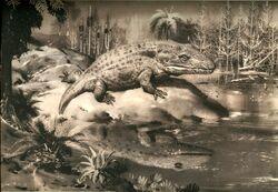 Mastodonsaurus, Burian, bw
