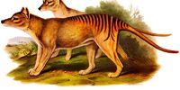 Girt Dog of Ennerdale