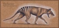 Thylacine by mo ffie-d53yj8w
