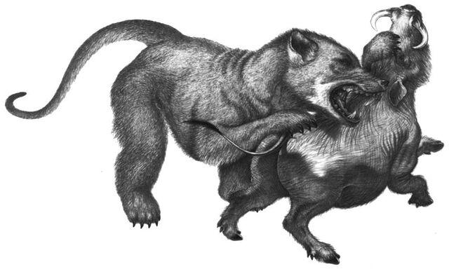 File:Oso perro.jpg