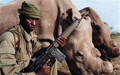 Rhino-chancellor 2331144c