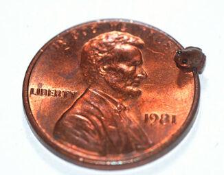 Mini-frog-penny-lg