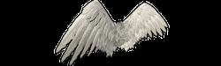 Back wing b