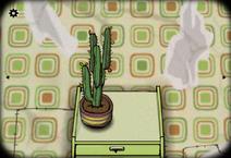 Cactus winter