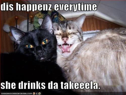 File:Funny-pictures-cat-takes-bad-photos-when-he-drinks-tequila.jpg