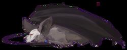 Bat puppy