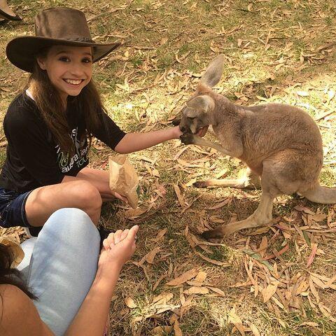 File:Mackenzie kangaroo 2015-03-17.jpg